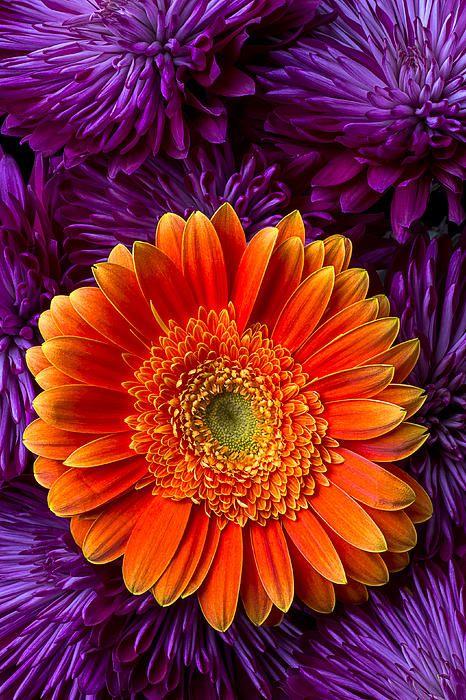Las gerberas son mis flores favoritas! Tanta variedad de colores, sin perfume invasivo, tan simples y resistentes... Claro, igualmente prefiero toda flor en su planta.