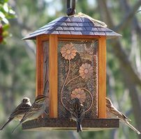 Dropped bird seed can cause sprouts to grow underneath your bird feeder.