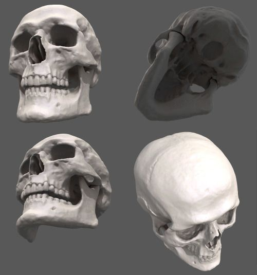 eyecaging:  Because you can never have enough Skull models Link CLICK HERE You can even download the model and throw all sorts of lighting on it in your program of choice. Thanks to Joakim Hellstedt for always enriching my life with awesome things. Would be friend again. 10/10.