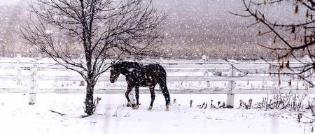 First Snowfall Photo by Julie Chambers — National Geographic Your Shot