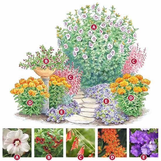красивый цветник из неприхотливых многолетников