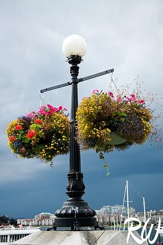 Colorful Flower Baskets Hanging On Lamppost Victoria