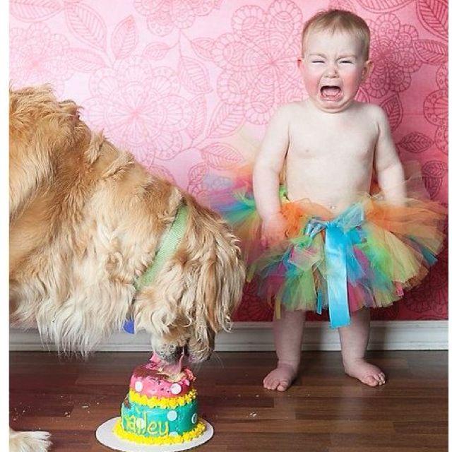 ahaha...poor thing!First Birthday Cake, Smash Cakes, Dogs Smash Cake, Cake Photos, 1St Birthday, Too Funny, So Funny, Birthday Smash, Birthday Cake Smash
