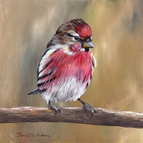 "Daily Paintworks - ""Common Redpoll No 2"" - Original Fine Art for Sale - © Janet Graham"