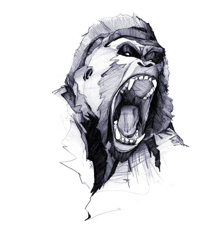 152 best Guerrilla gorillas images on Pinterest   Monkeys ... - photo#13