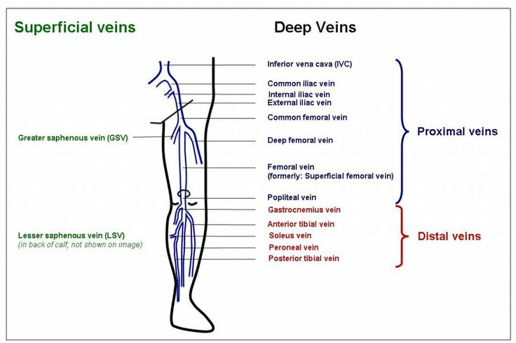 Pin by Ultrasound Blogger on Ultrasound Vascular   Leg vein anatomy  Ultrasound sonography