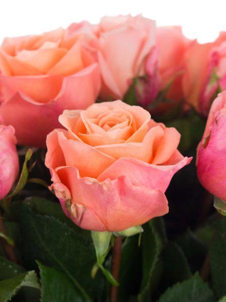 Apricotfarbene Rosen der Sorte 'Lady Magaret' (lachs-creme-rosa) und mehr frische Schnittblumen entdecken auf Blumigo.de - #blumen #schnittblumen #blumendeko #floristik #tischdeko #blumenstrauß #brautstrauß #tischdekoration #hochzeitsdekoration #hochzeit #hochzeitsdeko #hochzeitsblumen #sommerhochzeit #winterhochzeit #frühjahrshochzeit #herbsthochzeit #onlineshop #saisonblumen #peach #apricote #apricot #korallfarben #januar #februar #märz #april #mai #juni #juli #august #september #oktober…
