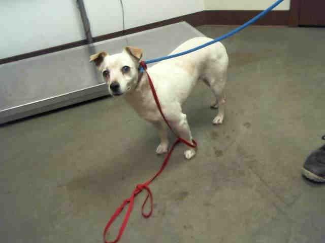 Www Petharbor Com Animal Search Adoptable Dog Pounds