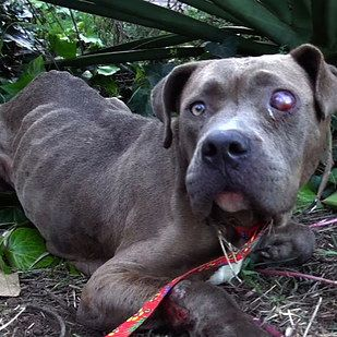 Best Rescued Dogs Before And After Images On Pinterest Your - 27 amazing transformations of dogs and cats before after adoption