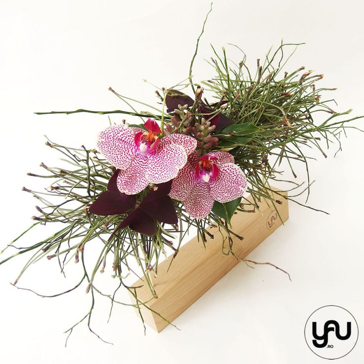 orhidee plante suculente si pin aranjament floral pentru MARTIE _ yau concept _ elenatoader (5)