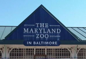 I loved going to the zoo the see the penguins and the giraffes...i still do.