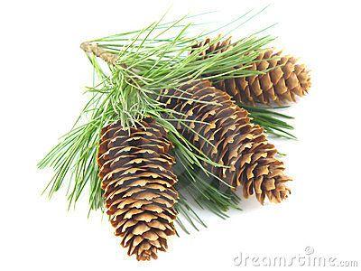 Mejores 33 imágenes de Still life ideas: Pinecones en Pinterest ...