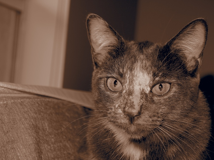 Hi Nala! Pets, Animals, Cats