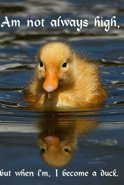 Go back duck...