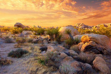 Joshua Tree National Park - v žáru mohavské pouště | USA na Světadílech