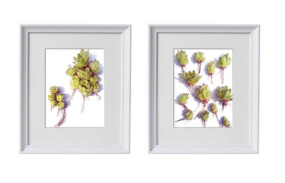Succulent prints in coastal style. Detail photography of various flower heads with roots, carefully and neatly placed on white canvas background. Two different layouts.