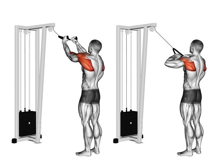 Desenvolver músculos que não crescem é uma tarefa muitas vezes difícil. Veja neste artigo, como resolver este problema! Com o desenvolvimento muscular, chegam alguns desafios. Uma pessoa que já treina, que não é mais um iniciante, quase sempre tem um grupamento muscular que não se desenvolve da mesma forma quem outros. Isso gera, além de …