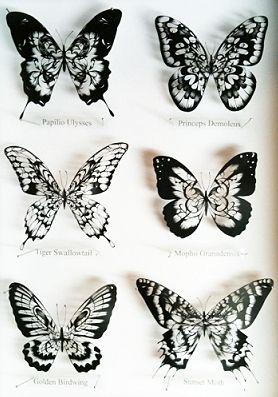 『切り絵:蝶々標本』