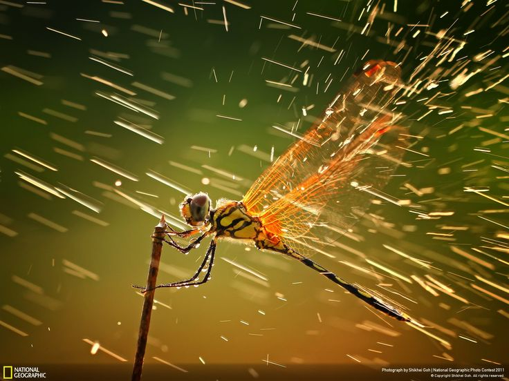 National Geographic 2011 photo of the year