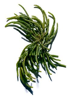 Salicornia delivers optimal moisture!