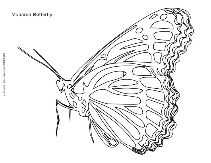 real butterflies coloring pages - photo#7
