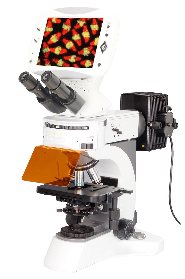 BUM500FLD compound digital LCD fluorescence microscope renovated the traditional way of microscopic observation and thoroughly resolves the fatigue for a long time working. Eyepieces and LCD Screen can both be used for convenient and comfortable viewing by individuals and share with groups. It is also feature the latest 5 Mega Pixels digital imaging microscopy techniques for quick and easy snapshots or videos.