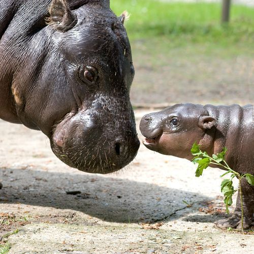 Hungry hippo!