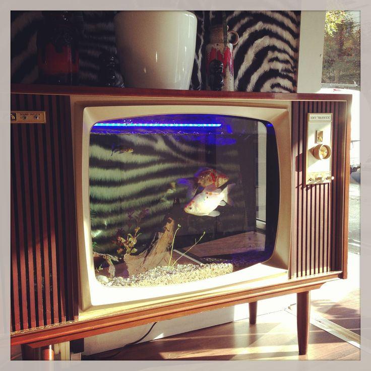 17 Best Images About Project Fish Tank On Pinterest: 23 Best Images About The Tv Aquarium. On Pinterest