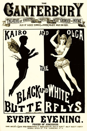 The black white butterflys