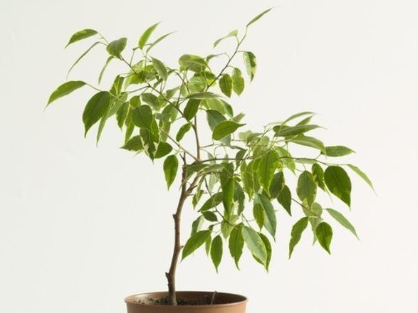 Je hoort het vaak, planten zijn goed voor het zuiveren van de lucht in je huis. Maar over welke planten gaat het dan precies?