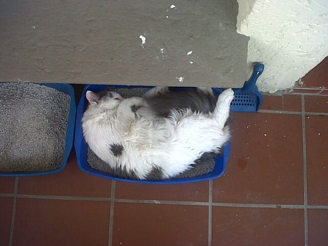 Quality testing the fresh cat litter!