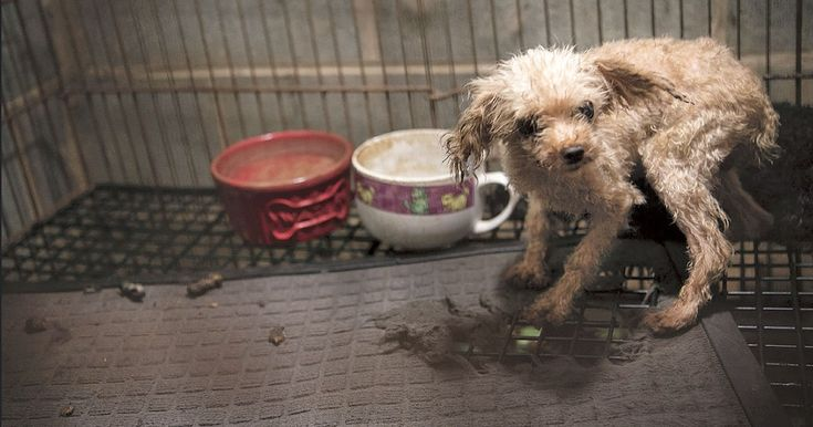 Rescue is just the first step to recovery for animals born into overcrowded dog farms.