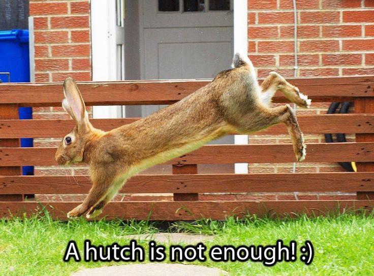 35 Best Amazing Rabbit Setups Images On Pinterest