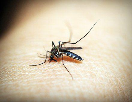 1to1 YURECA: MALARIA DISEASE