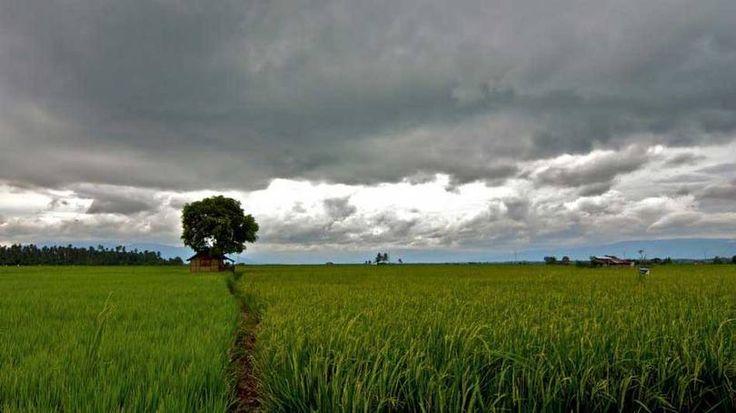 As 10 florestas mais devastadas do planeta   Panorama Eco