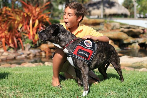 How Does A Service Dog Help Someone With Seizures