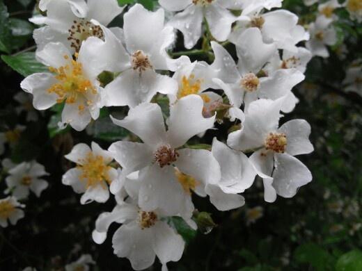 비맞은 꽃