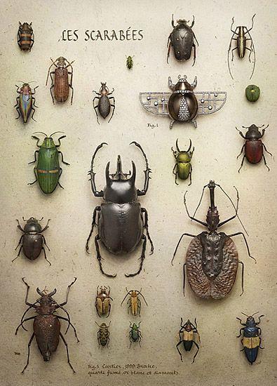 Beetles and bugs. Peter lippmann for cartier art magazine.  #strange #curiosities #rare #weird #oddities #steampunk #fantasy