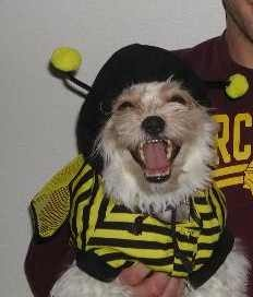 this guys loves his bee costume!