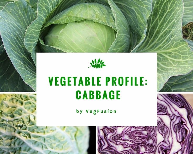 "Cabbage, for me, means winter. It is such a sturdy vegetable; it survives cold winters. When you eat cabbage while in season, everything that protects cabbage against cold works for you exactly the same way. That's what we call seasonal eating. Types of Cabbage The most common types of cabbage are: • Green cabbage •… <a href=""http://vegfusion.org/ingredient-profile-cabbage/"" class=""more-link"">Continue reading <span class=""sc..."