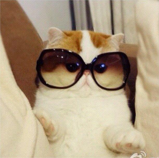 Snoopybabe: mais um gato fofo faz sucesso com fotos na internet [galeria]