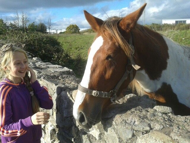 Friendly horse. Bessborough, Cork city