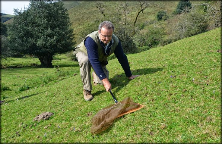 Tximeletak hartzen.  ADEMAR (Asociación para la defensa del medio ambiente rural) elkarteko kidea Erdizagan.
