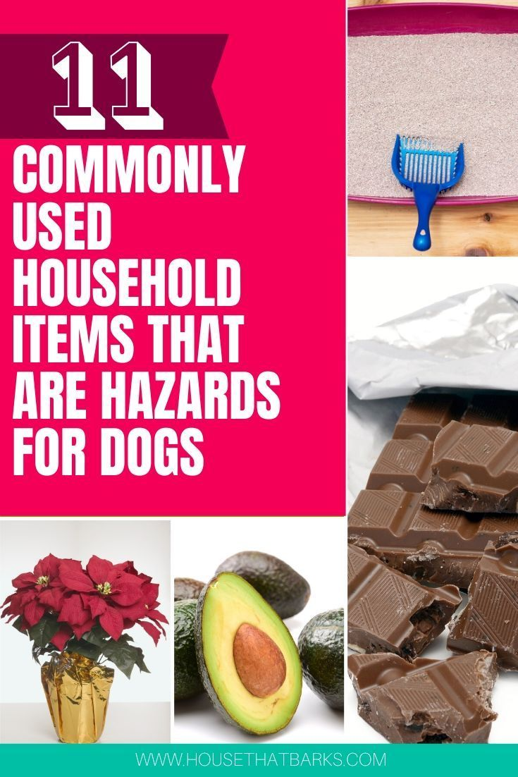 11 Commonly Used Household Hazards For Dogs Dog Nutrition Dog