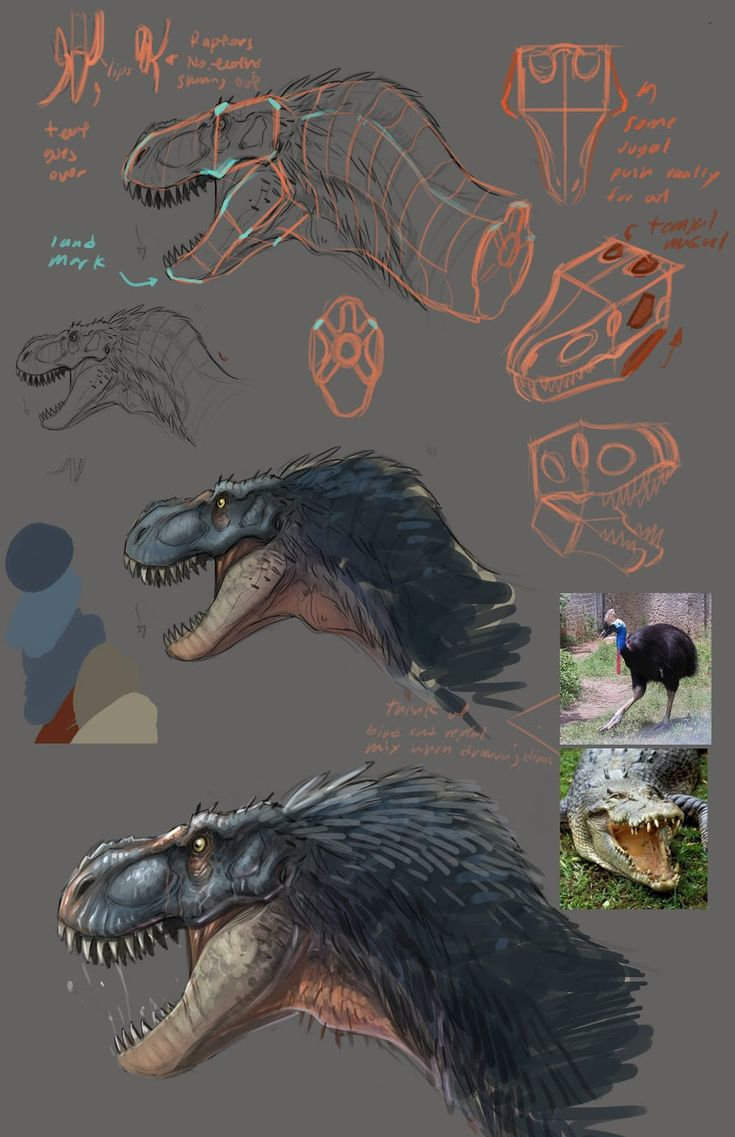 "Concept Design Academy: ""Animal Anatomy"" with Jonathan Kuo~!! ✤ 