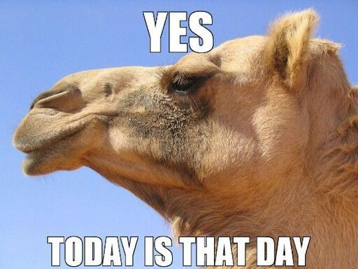 Yes Today Is Hump Day Pictures, Photos, and Images for Facebook, Tumblr, Pinterest, and Twitter