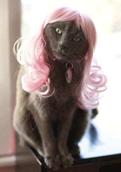 Bahahahaha KittyWigs.com