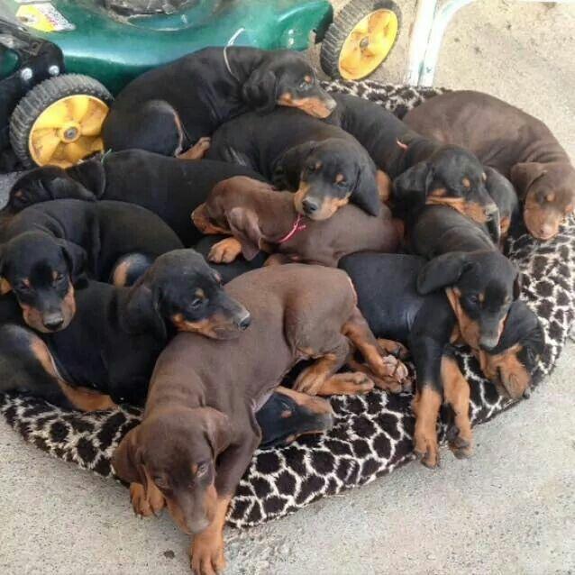 Bundles of heaven :)