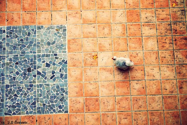Avoir une poule chez soi
