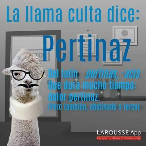#Vocabulario #PalabrasYMásPalabras